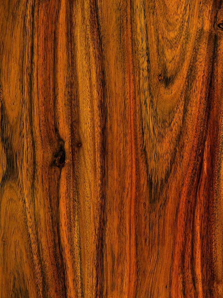 Mango Wood_Mango Wood_1_Sean Gladwell_1