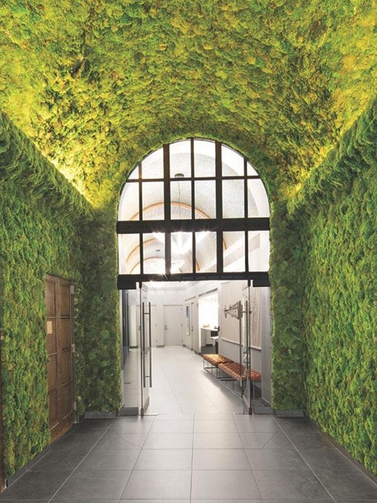 Moss Wall_Photo courtesy of @torontoparadiseplants 2