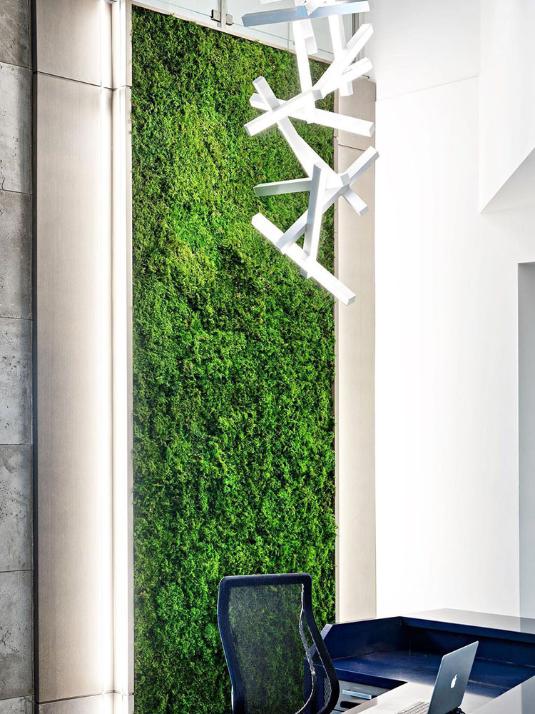 Moss Wall_Photo courtesy of @torontoparadiseplants 3